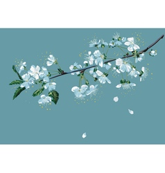 Branch of blossom cherry vector image