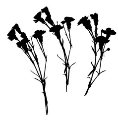 carnation silhouettes vector image