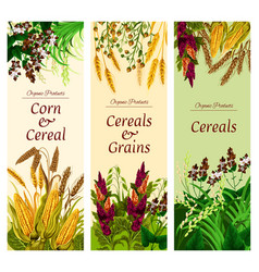 Cereal grain and vegetable banner healthy food vector