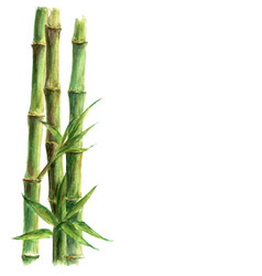 Green bamboo plants isolated on white background vector
