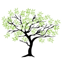 Olive tree branch vector