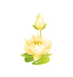 water lily flower floral icon realistic cartoon vector image