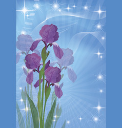 flowers iris for holiday design vector image vector image