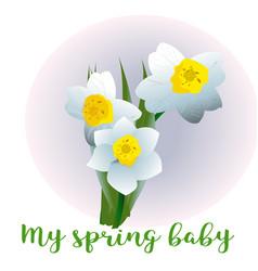 spring flower narcissus for newborn vector image