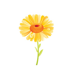 daisy flower floral icon realistic cartoon cute vector image