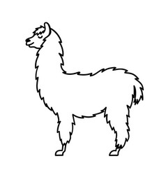 Isolated outline cartoon baby llama vector