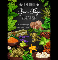 spices and herbs culinary herbal seasonings vector image