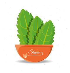 stevia natural sweetener plant and organic product vector image