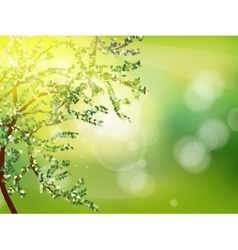 Abstract spring background eps 10 vector