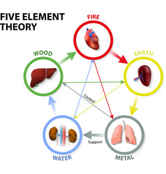 Five Element Theory vector image