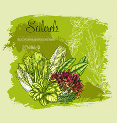 poster salads or leafy lettuce vegetables vector image