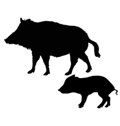 wild boars silhouettes vector image