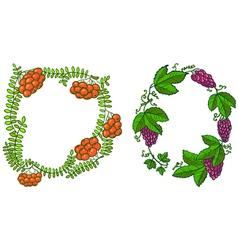 rowan and grape vector image vector image