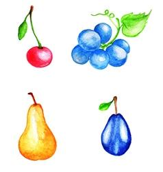 Set of watercolor fruits vector image vector image