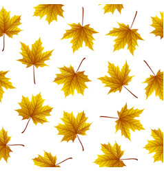 gold maple leaves isolated on white background vector image