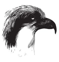 head an osprey vintage vector image