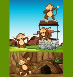 wild monkeys group in many poses in animal park vector image