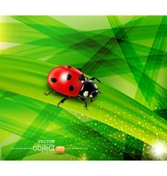 ladybug on the background vector image vector image