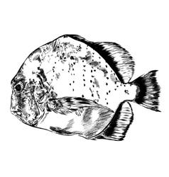 Sketch of hand drawn fish vector