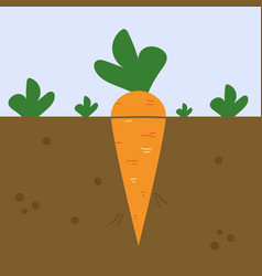 Fresh carrot on white background vector