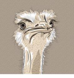 Funny ostrich bird vector