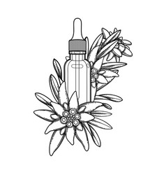 Graphic essential oil bottle decorated vector
