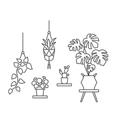 house plant line art icon flowers in pots vector image
