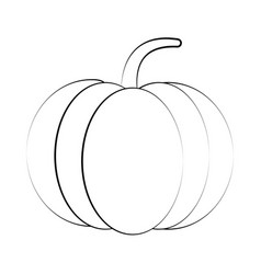 pumpkin fresh vegetable vector image