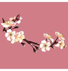 Sakura flower on red background vector