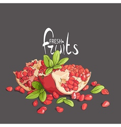 pomegranate on a black vector image vector image