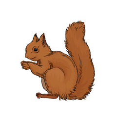 Cute red squirrel wild forest animal vector