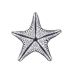 hand drawn ink sketch starfish vector image