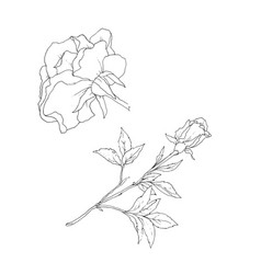 Set detailed isolated outline rose bud vector