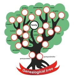 genealogical tree vector image vector image