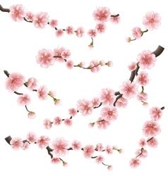 Set of sakura japan cherry branch EPS 10 vector image
