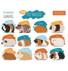 guinea pig breeds icon set flat style isolated on vector image