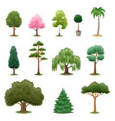 Tree types green forest pine treetops vector