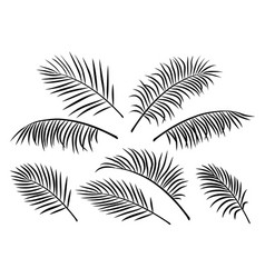 Tropical set of palm leaves vector