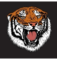 Angry tiger is growling vector