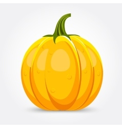 Pumpkin isolated on white background vector