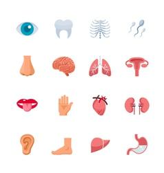 Human Anatomy Icons vector image vector image