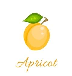 Orange apricot icon vector image vector image