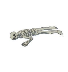 Laying skeleton vector image vector image