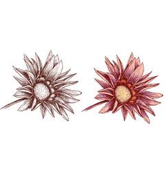 Garden flower inflorescence vector