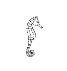 Seahorse silhouette hand drawing seahorse vector