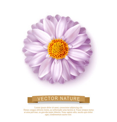 pink flower isolated on white background element vector image vector image