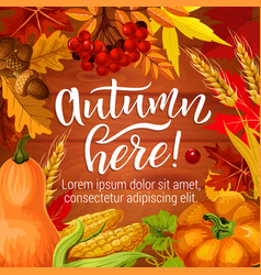 autumn season harvest holiday poster vector image