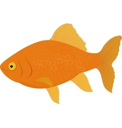 Gold fish Fish isolated on a white background vector