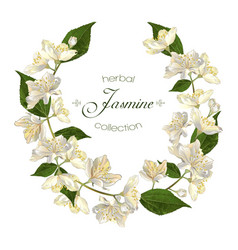 Jasmine flowers wreath vector