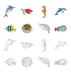 shrimp fish hedgehog and other speciessea vector image